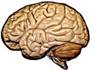 Brain_hirez